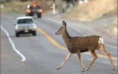 deer highway