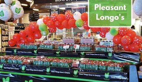 best berry display photo